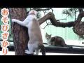 遊び盛りの猫たち